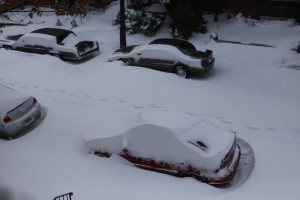 Cars buried in snow in Queens (Photo by Maurice Pinzon)